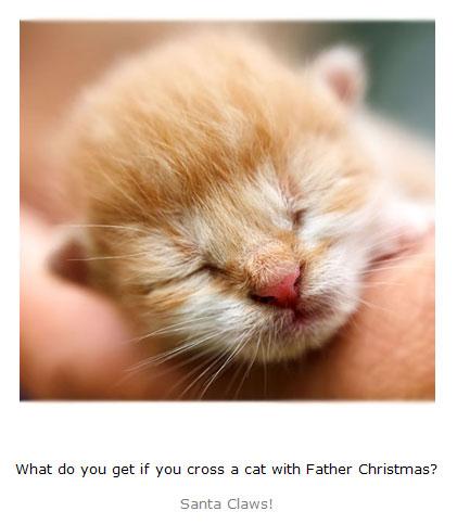 Kitten Jokes for Kids book