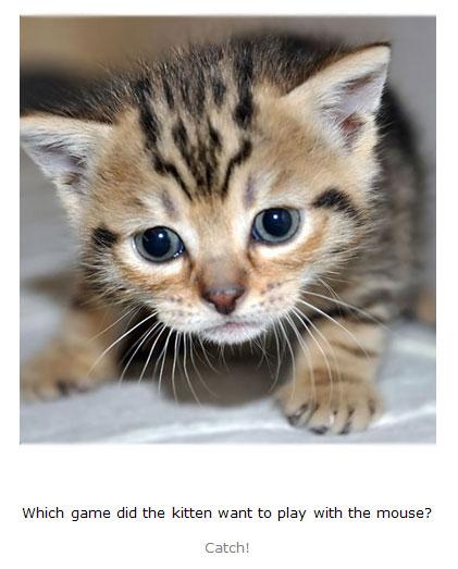 Kitten Jokes & Riddles for Kids book
