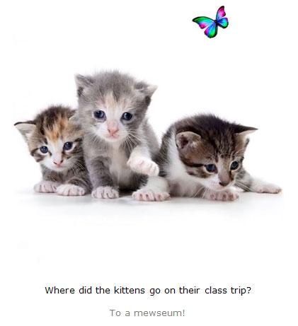 Kitten Jokes for Kids